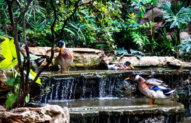 фото C Hotel Hacienda Forestview изображение №66