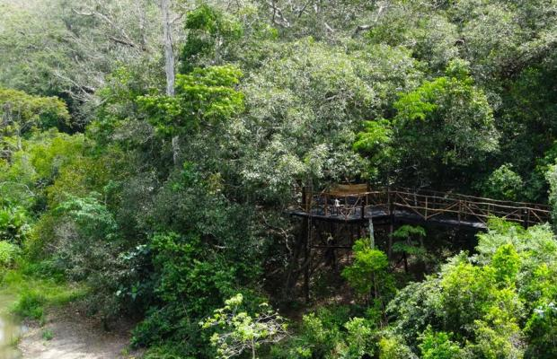 фотографии отеля Shimba Rainforest Lodge изображение №11