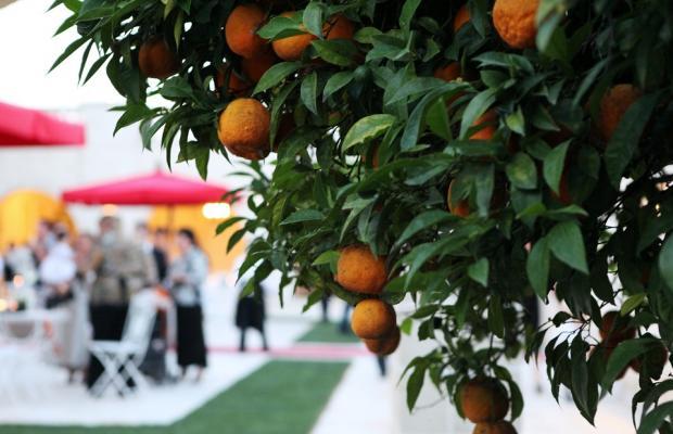 фото Masseria Traetta Exclusive изображение №10
