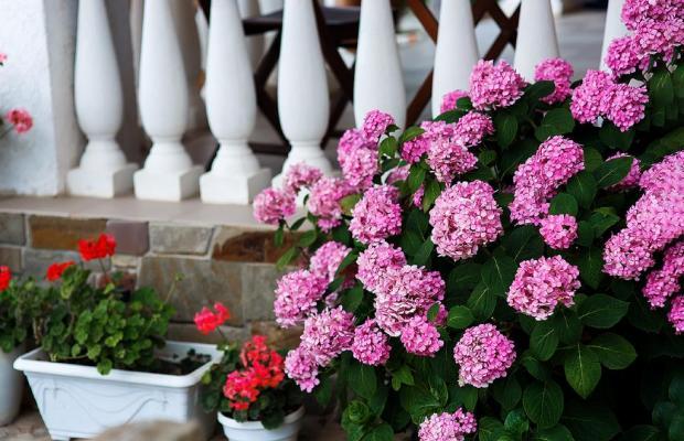 фотографии отеля Гостевой Дом Морская Феерия изображение №11