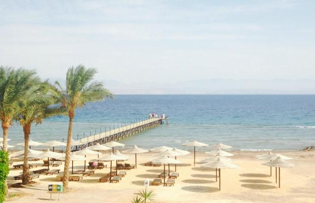 фотографии отеля Morgana Beach Resort Taba (ех. Morgana Azur Resort; Club Marmara) изображение №19