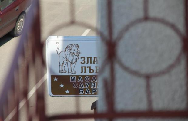 фотографии Golden Lion (Золотой Лев) изображение №8