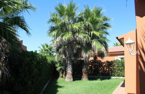 фото Begonias изображение №2