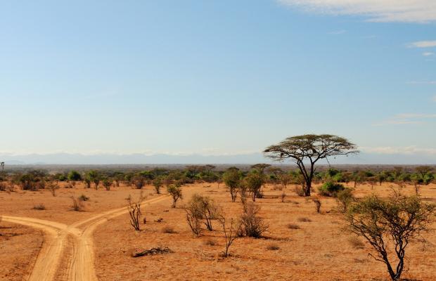 фотографии отеля Samburu Serena Safari Lodge изображение №7