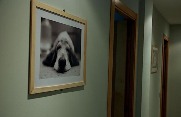 фото Blue Moon Apartments изображение №14