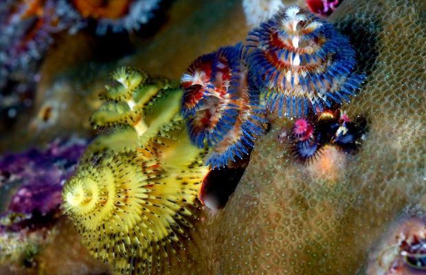 фото Wakatobi Dive Resort изображение №22