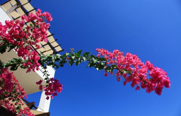 фото отеля Aktur Residence изображение №89