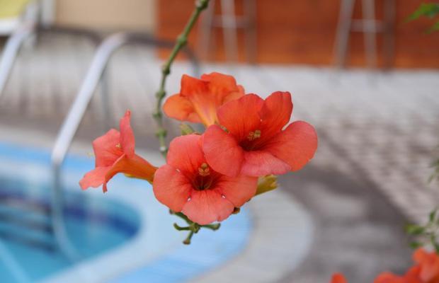 фото отеля Pavlos изображение №29