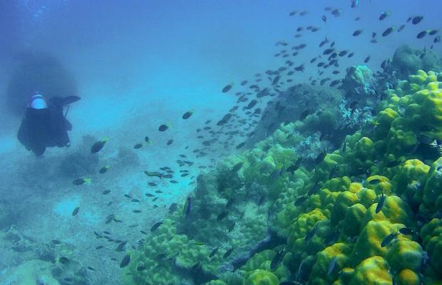 фотографии отеля Maiton Private Island (ex. Honeymoon Island Phuket) изображение №3