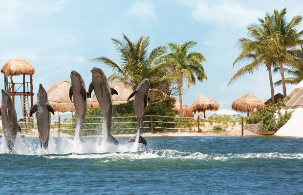 фото отеля Hyatt Ziva Cancun (ex. Dreams Cancun; Camino Real Cancun) изображение №57