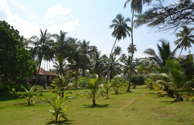 фотографии Kosgoda Beach изображение №4