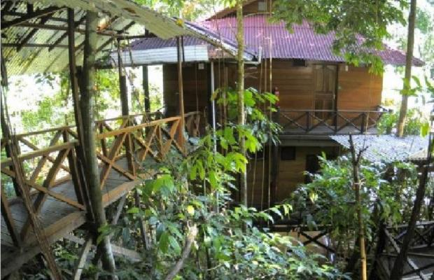 фото Borneo Tropical Rainforest изображение №2