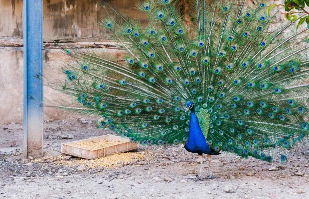 фотографии Hostal de la Trucha изображение №8